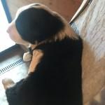 cucciolata-cucciola-fla-del-conte-01