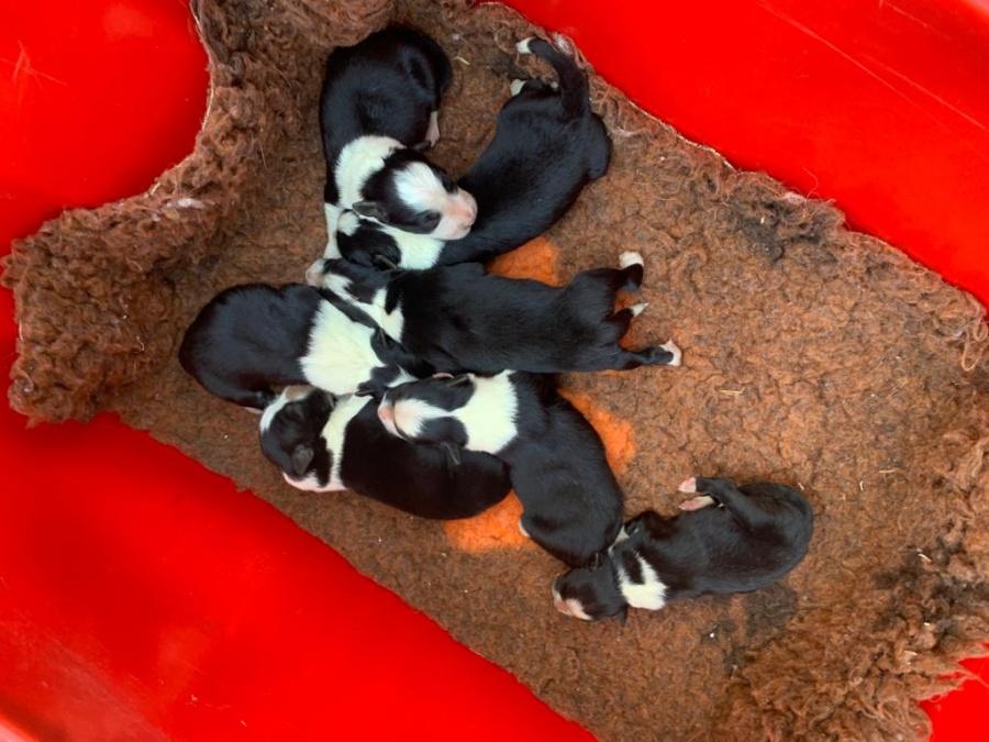 cuccioli Bella al sole 1