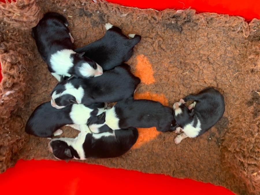 cuccioli Bella al sole 2